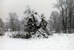 snijeg rs