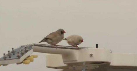 ptice-rokeri