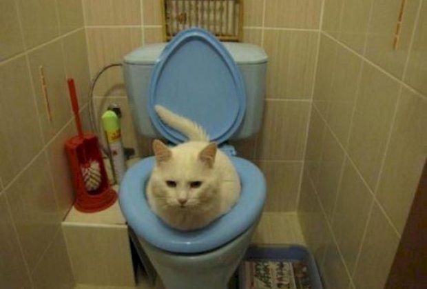 Maca vrsi nuzdu