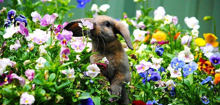 Zec mirise cvijece