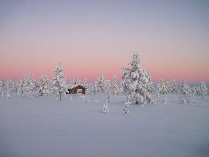 borealna prasuma