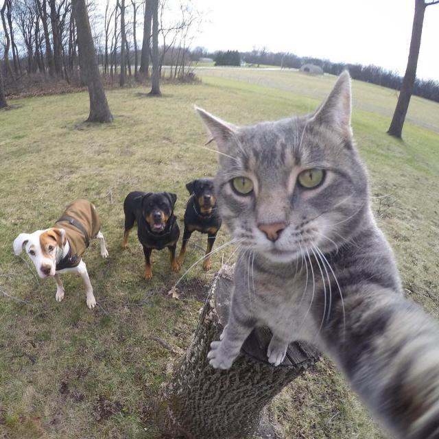 selfie macak