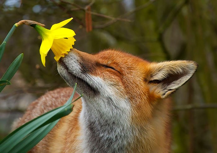 zivotinja cvijece 1