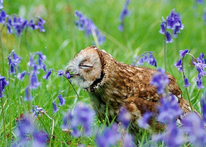 zivotinja cvijece 10