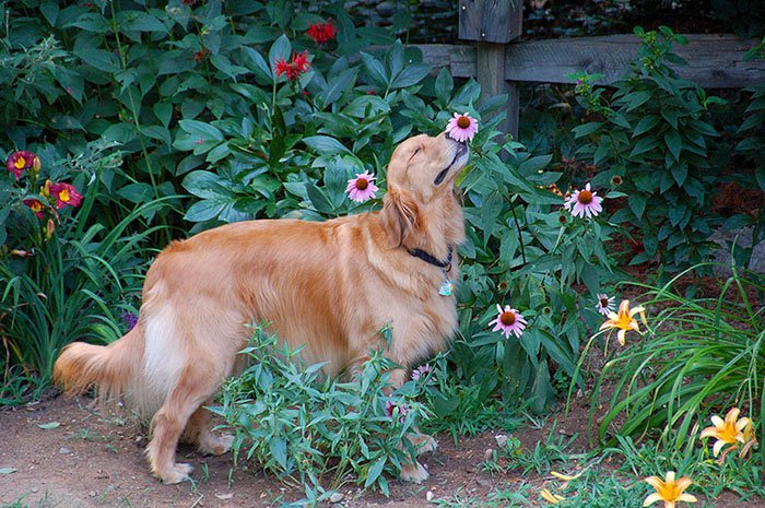 zivotinja cvijece 11