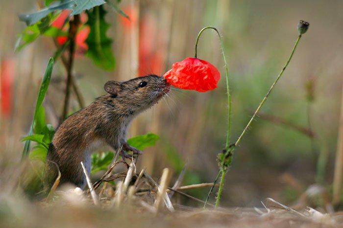 zivotinja cvijece 14