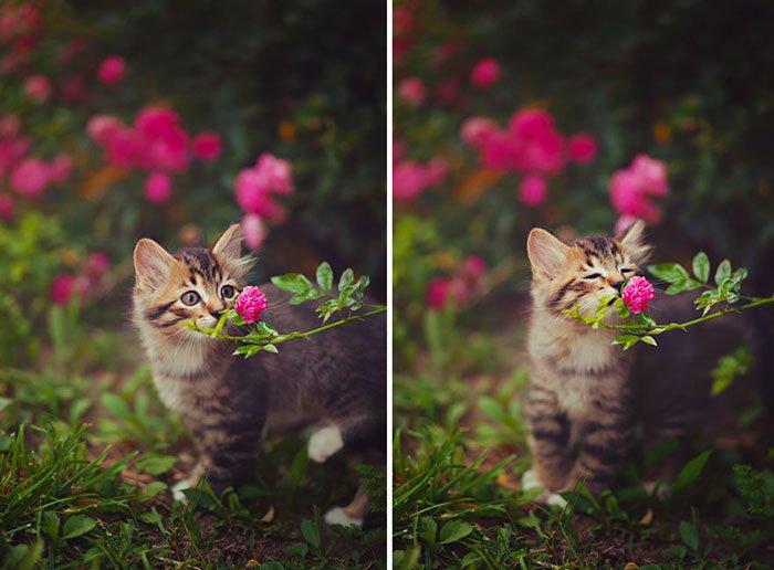 zivotinja cvijece 2