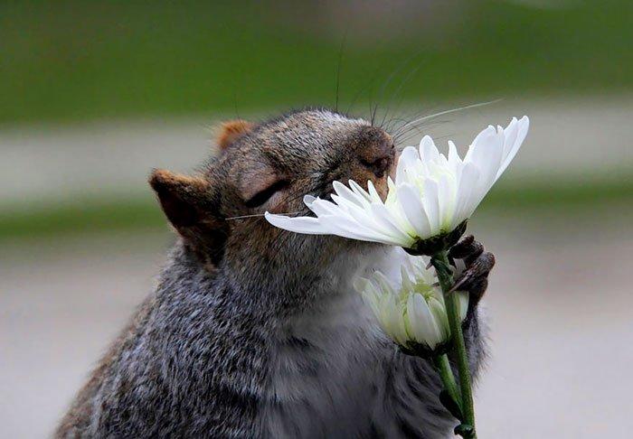 zivotinja cvijece 4
