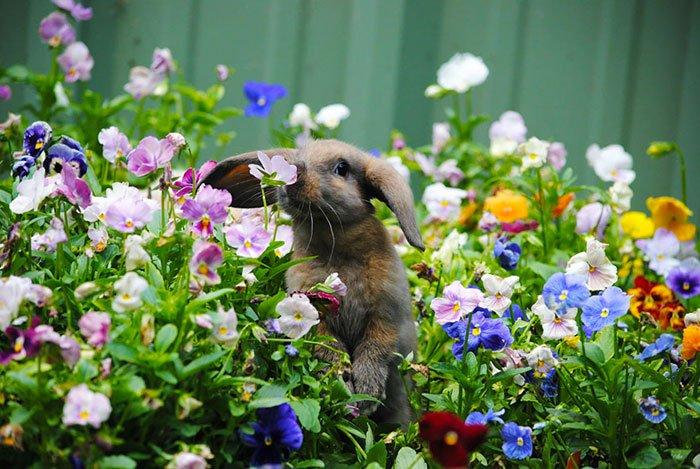 zivotinja cvijece 5