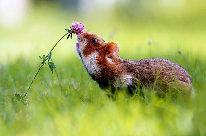 zivotinja cvijece 9