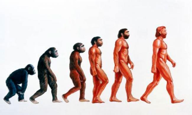ljudsko-tijelo-evolucija