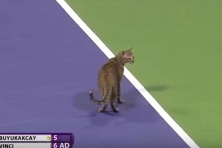 macka doha tenis