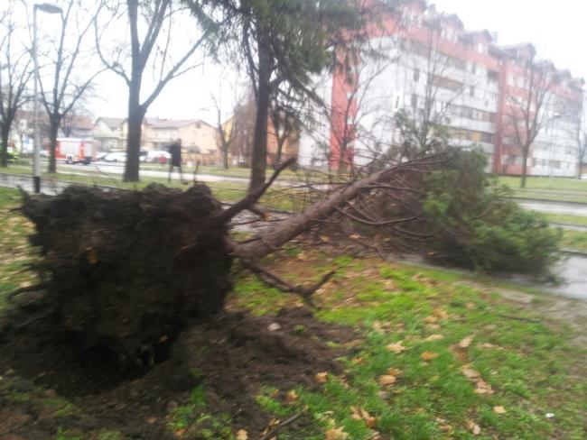 (FOTO) Nevrijeme u Banjaluci: Vjetar čupao drveće i usporio saobraćaj