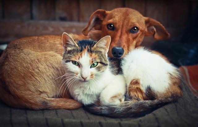 psi i macke