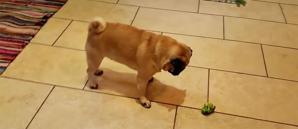 pas brokoli