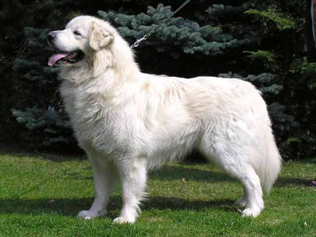 pirinejski planinski pas