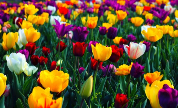 proljece