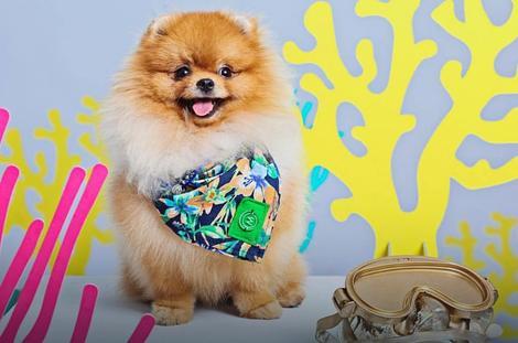 odjeca za pse3