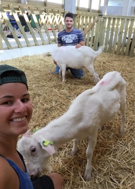 farma koza jelicka