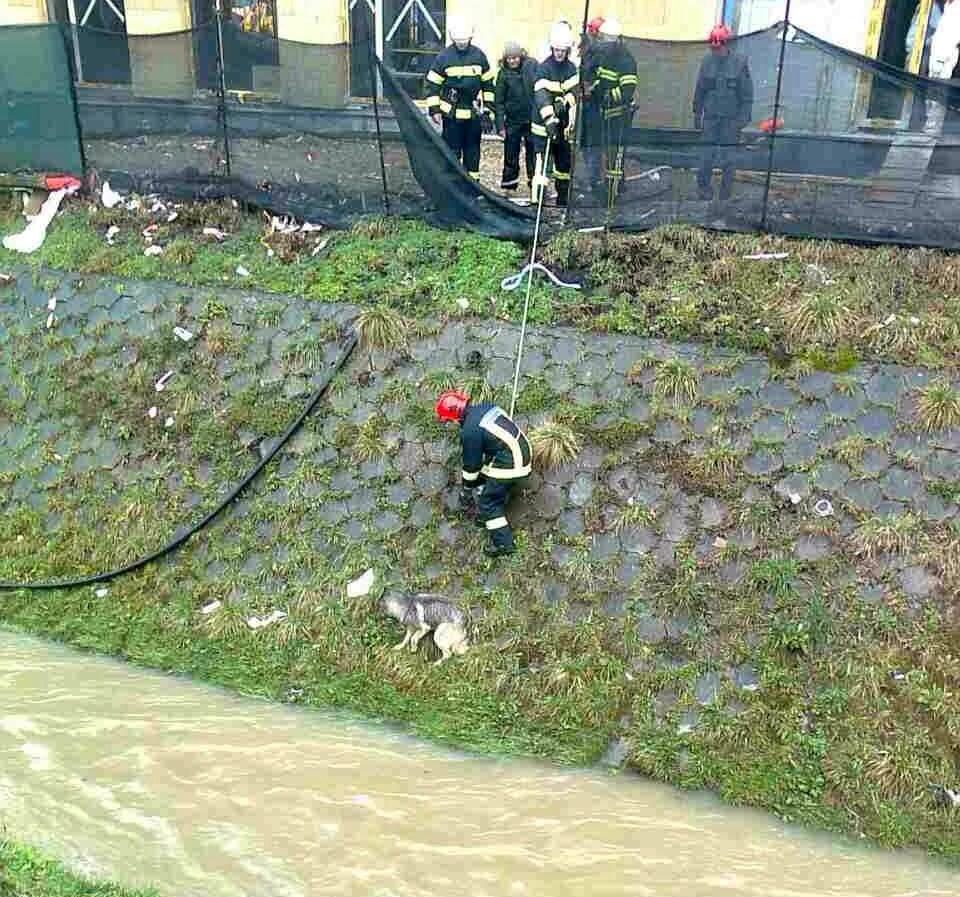 vatrogasci spasavanje psa
