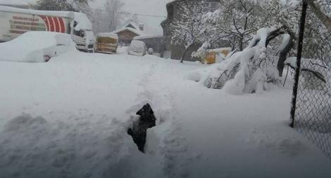 knezevo snijeg