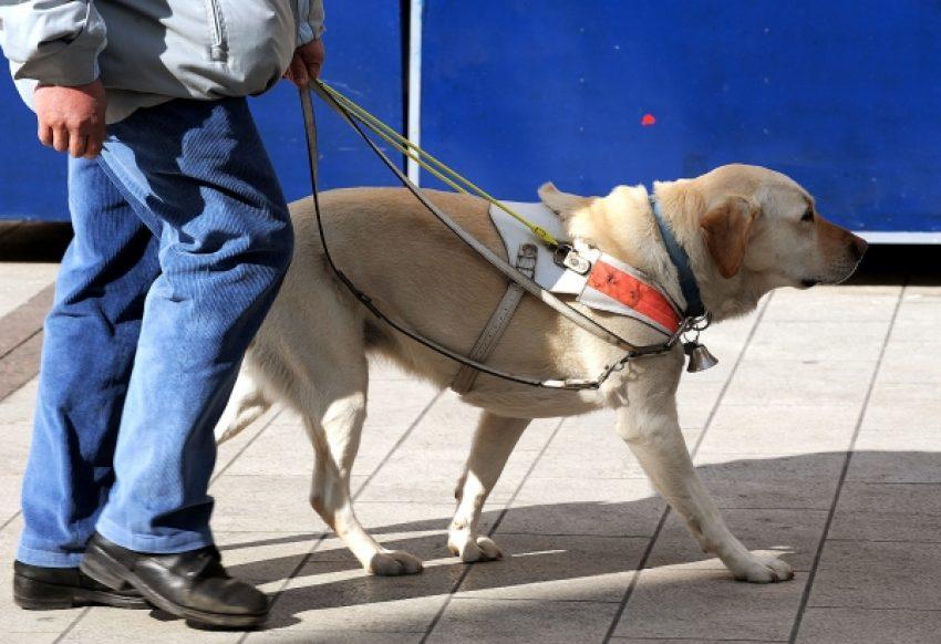 psi vodici
