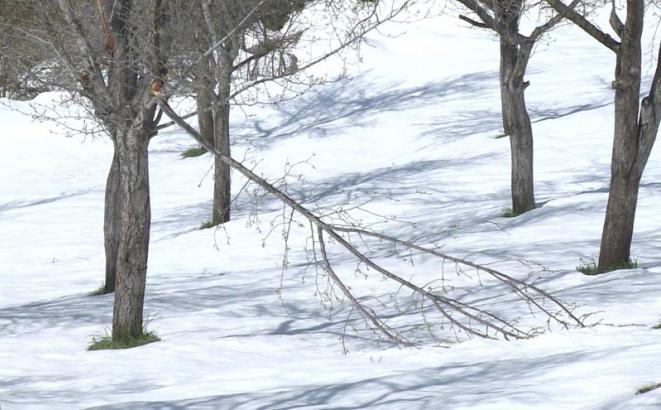 snijeg stricici