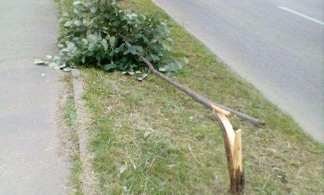 drvo banjaluka