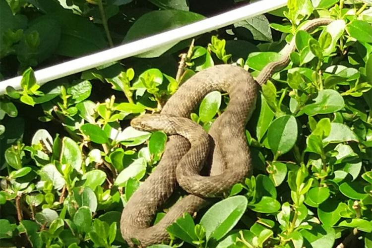 zmija banja luka