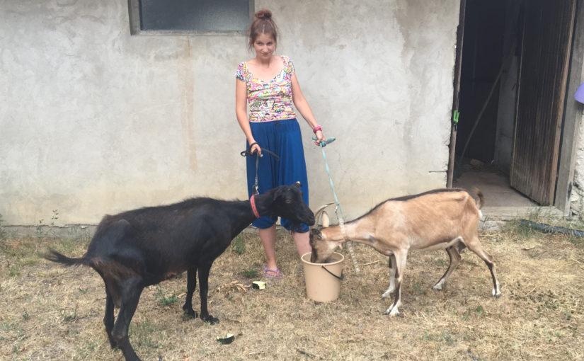 Laktaši: Anonimni donatori samohranoj majci četvoro djece poklonili dvije koze