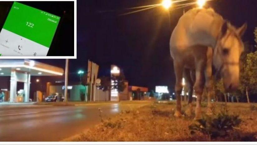(VIDEO) Konji ugrožavaju saobraćaj na tranzitu, iz policije ne reaguju