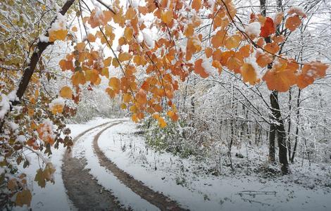 snijeg banjauka