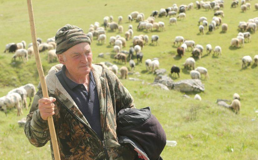 BLAGO KOJE SE NE MOŽE IZMJERITI PARAMA  Slavko sa Manjače ima stado od 1.500 ovaca